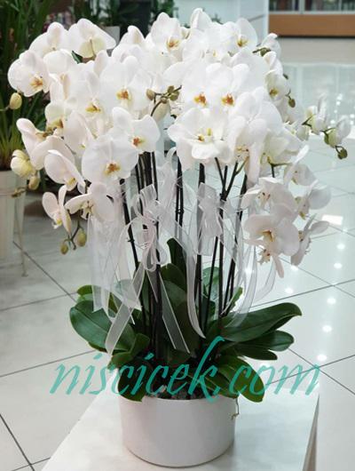 Seramikte 10 Köklü Orkide - Ürün Kodu:662