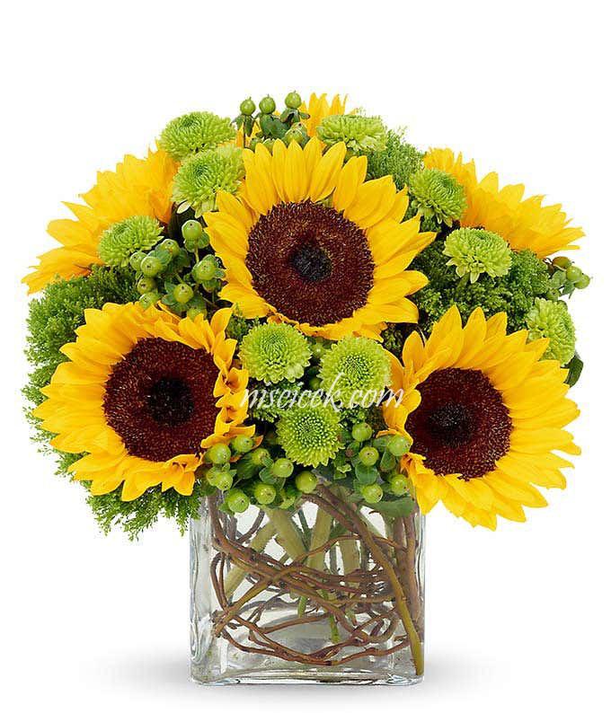 Cam Vazoda Ay Çiçekleri ve Yeşil Biçme - Ürün Kodu:489