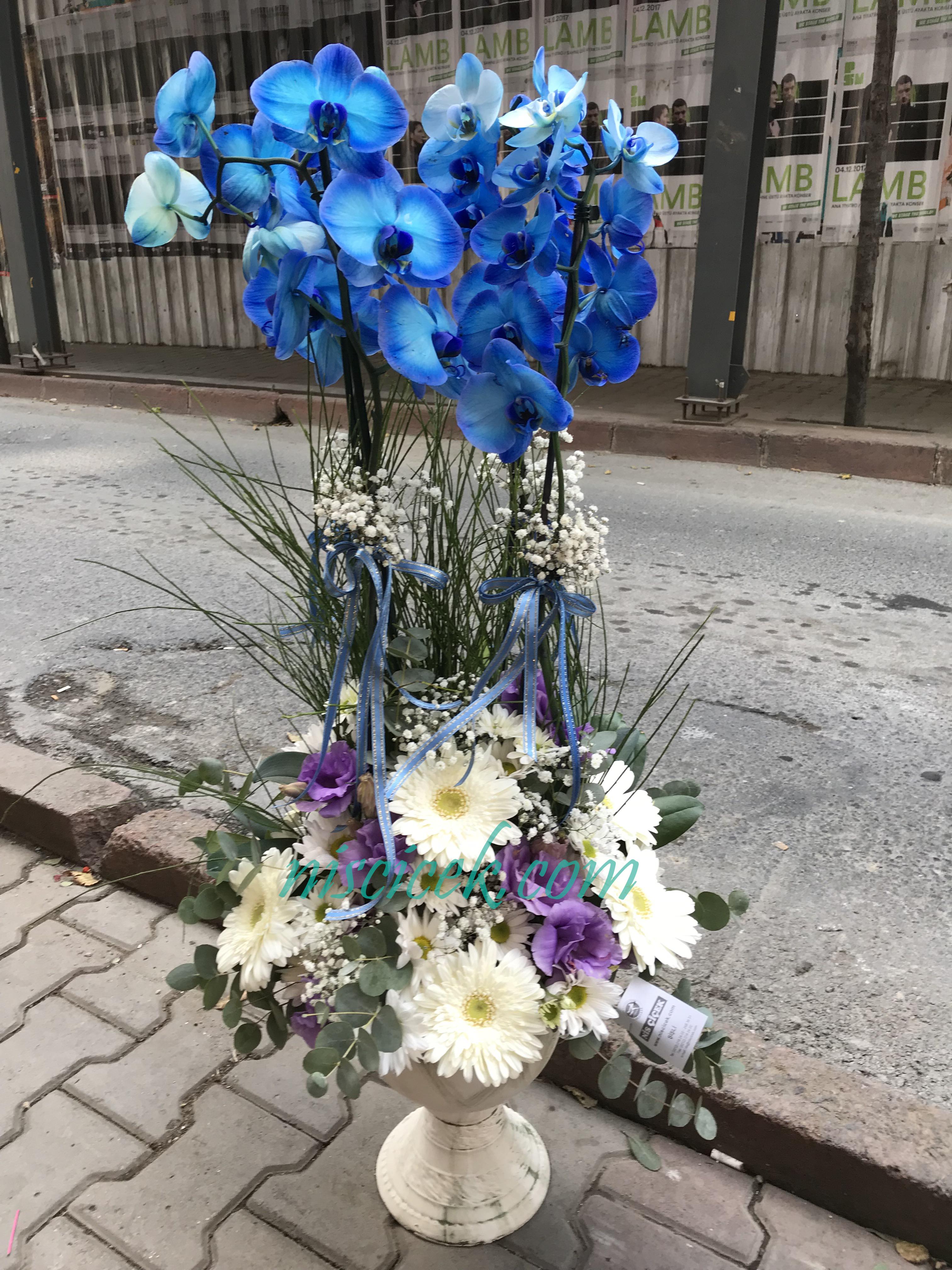 Seramik Saksıda 2 Köklü Mavi Orkide Beyaz Mor Aranjman Tanzim - Ürün Kodu:704