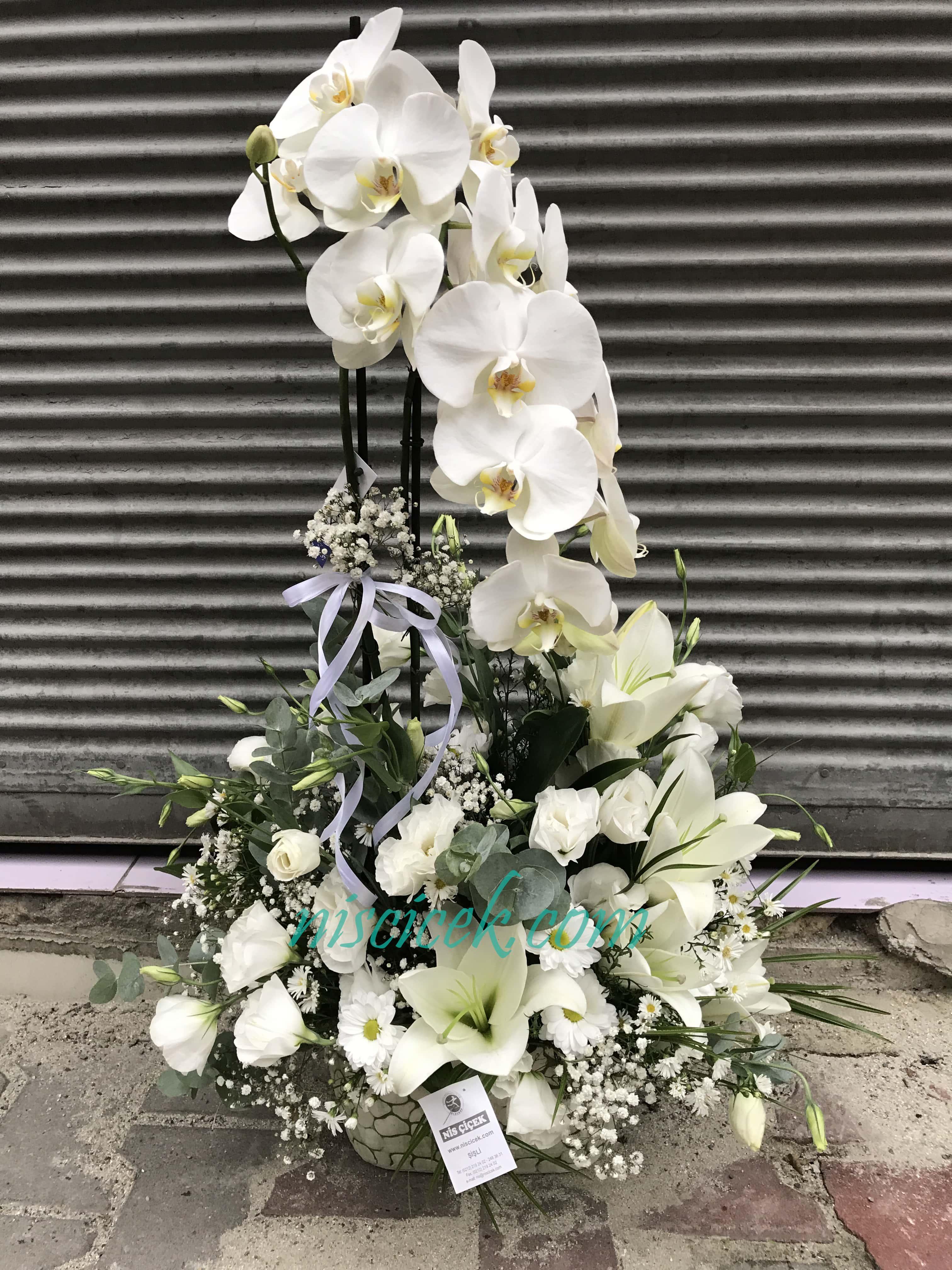 Seramik Saksıda 2 Köklü Orkide Beyaz Lilyum,Lisyantus - Ürün Kodu:719