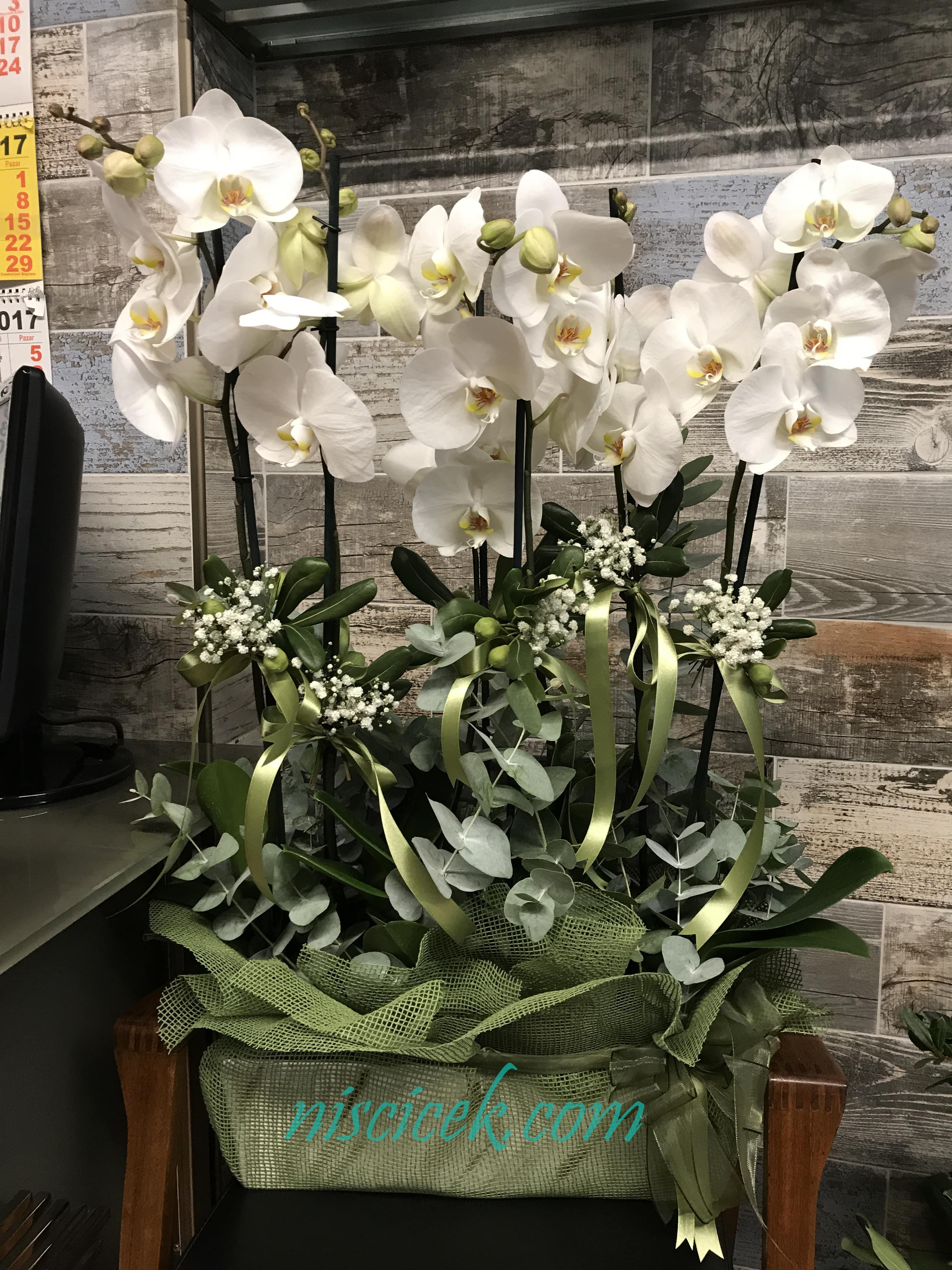 Seramik Saksıda 6 Köklü Beyaz Orkide - Ürün Kodu:723