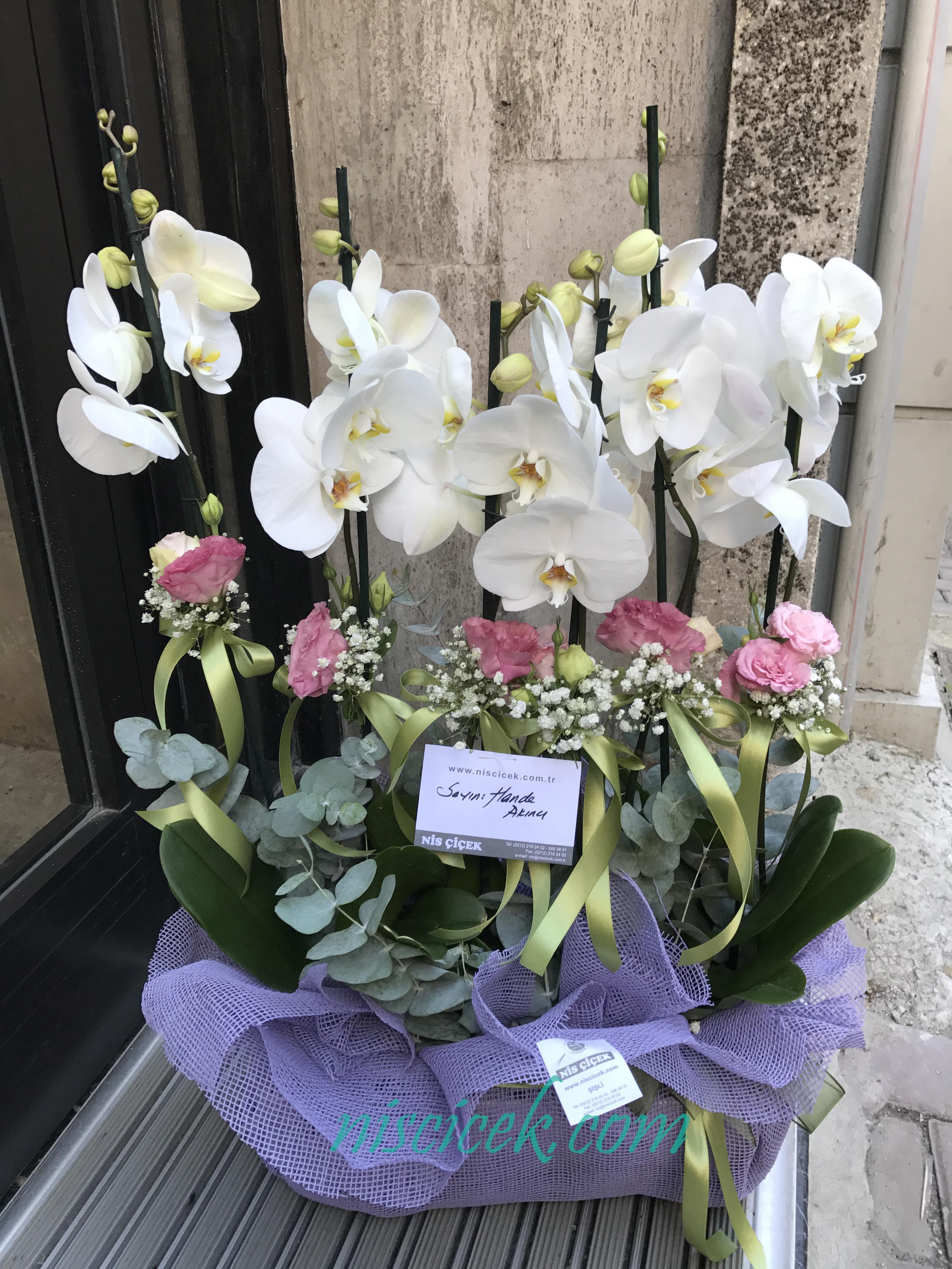 Seramik Saksıda 6 Köklü Beyaz Orkide - Ürün Kodu:724