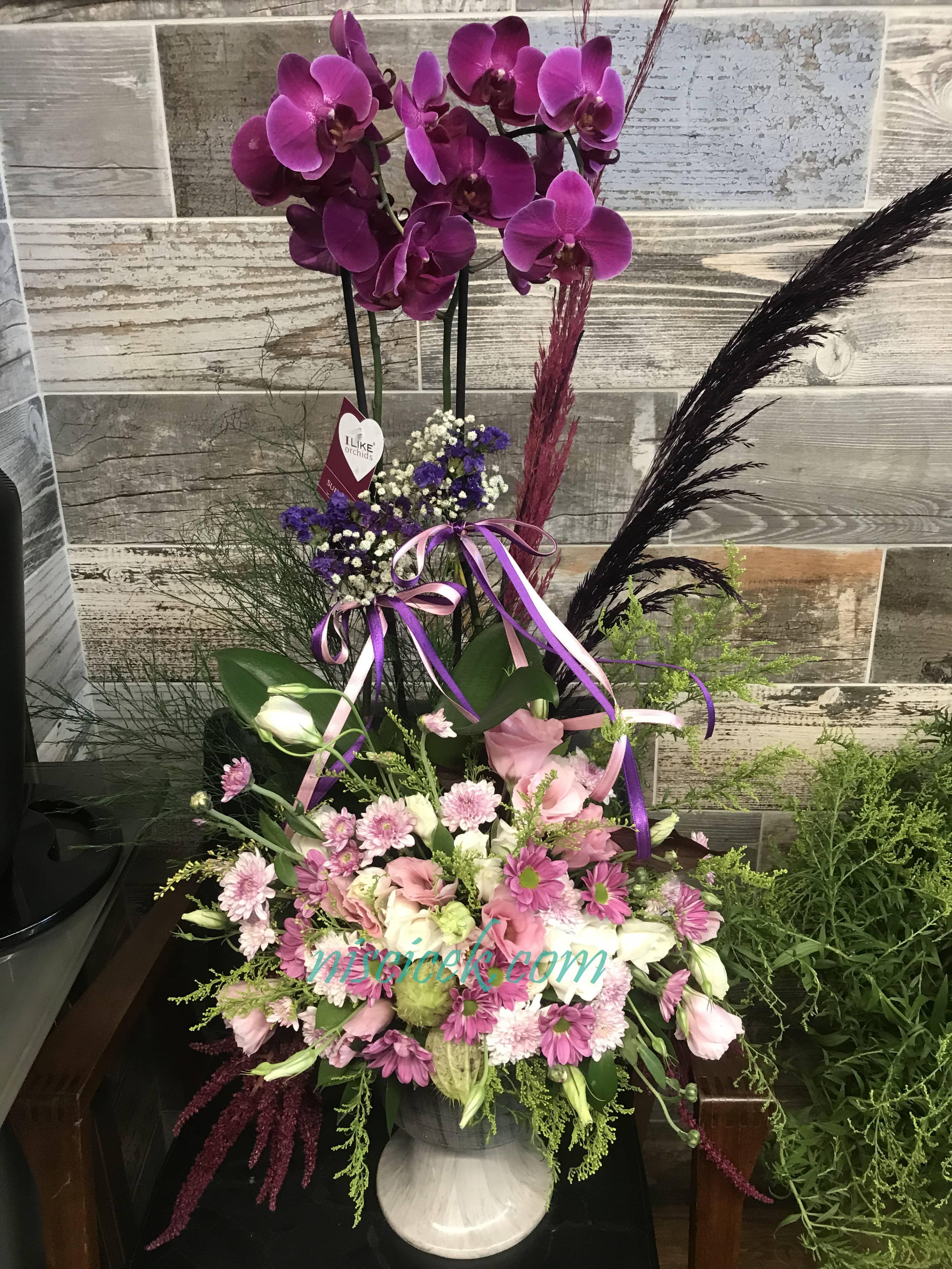 Seramik Saksıda 2 Köklü Mor Orkide Pembe Beyaz Mor Tanzim - Ürün Kodu:737