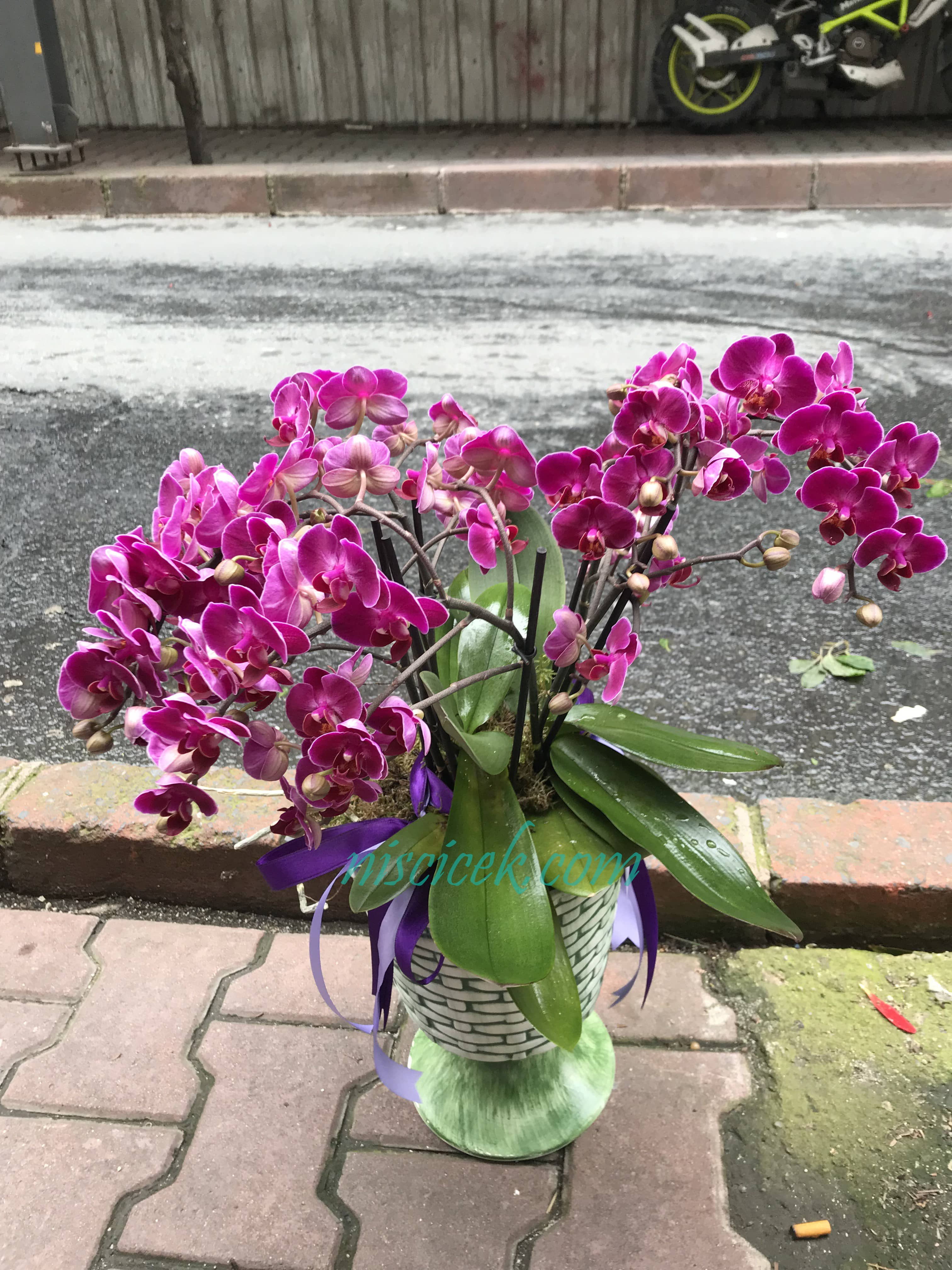 Seramik Saksıda Butik Orkide - Ürün Kodu:744