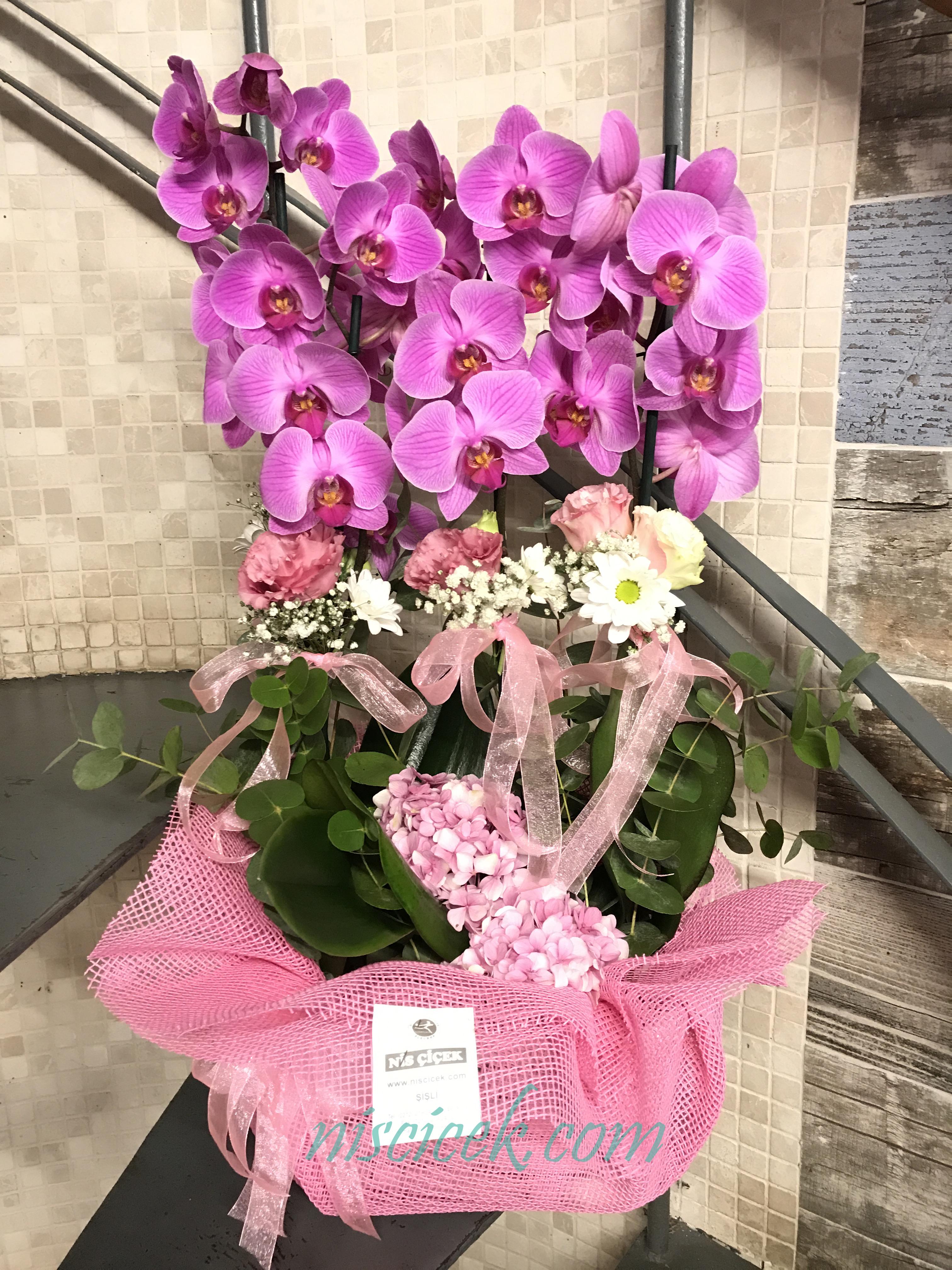 Seramik Saksıda 4 Köklü Mor Orkide Pembe Beyaz Tanzim - Ürün Kodu:695