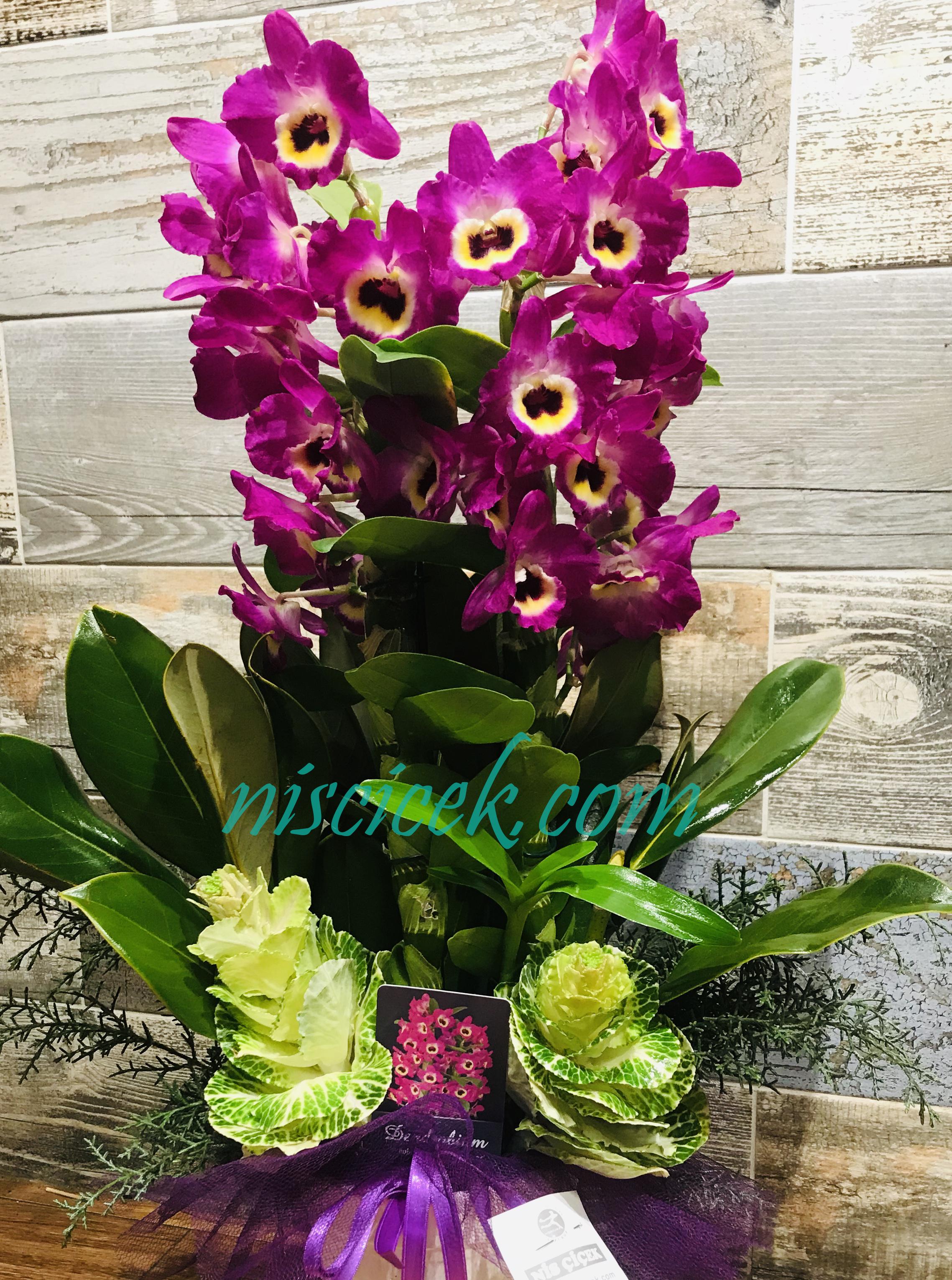 Seramik Saksıda Bambu Orkide - Ürün Kodu:700