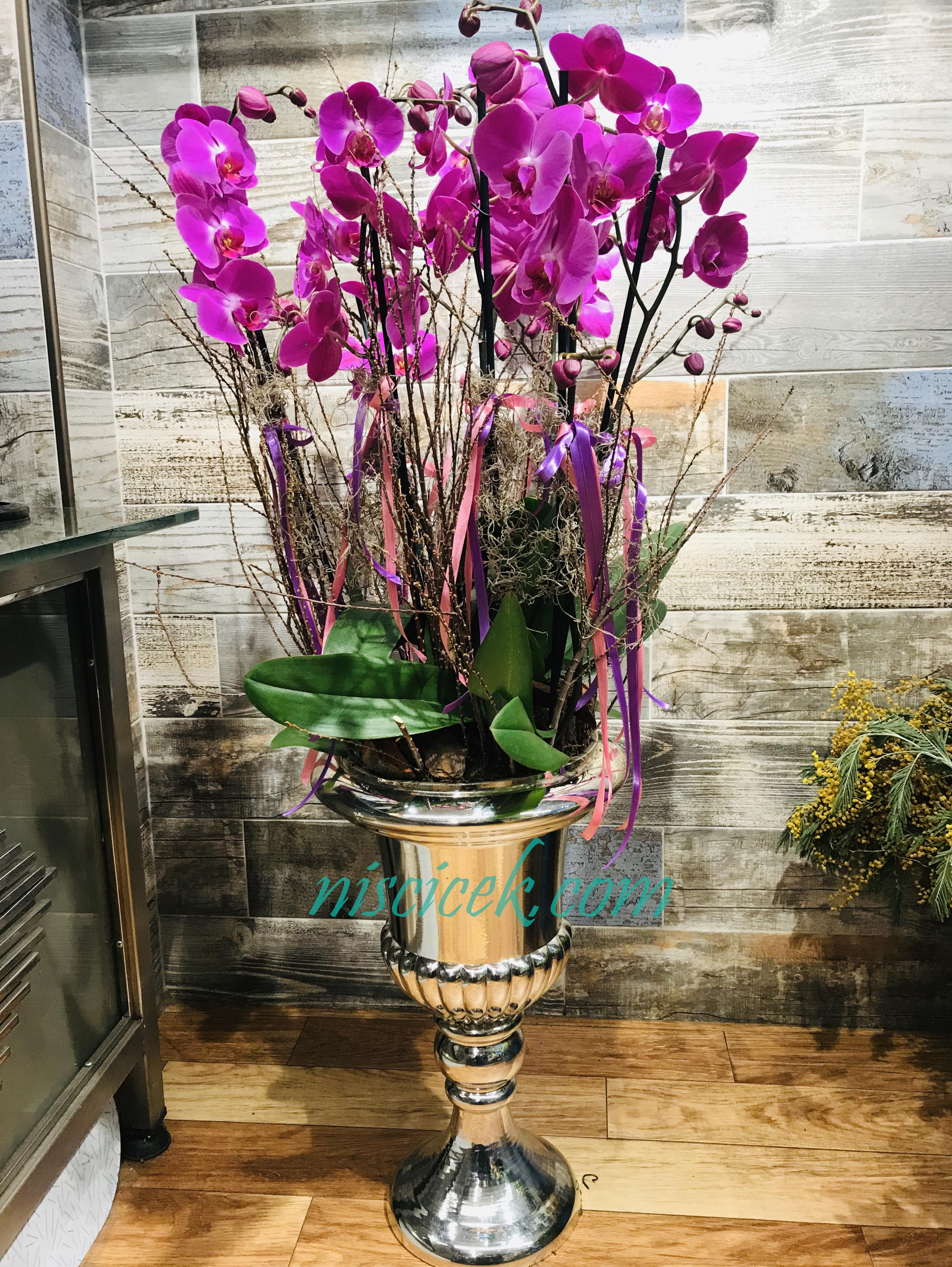 Saray Vazoda 6 Köklü Mor Orkide - Ürün Kodu:702