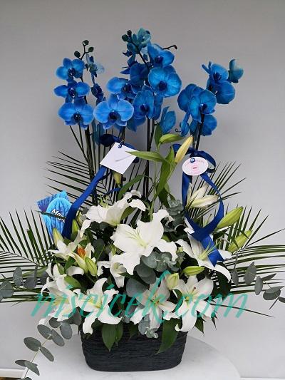 Seramik Saksıda 4 Köklü Mavi Orkide Beyaz Lilyumlu Aranjman - Ürün Kodu:669
