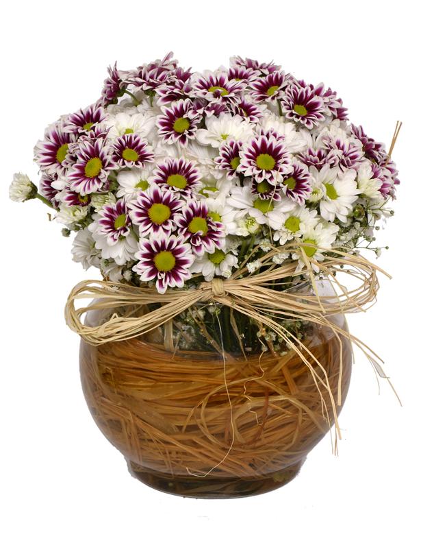 Akvaryumda Camda Pembe Beyaz Kır Çiçekleri