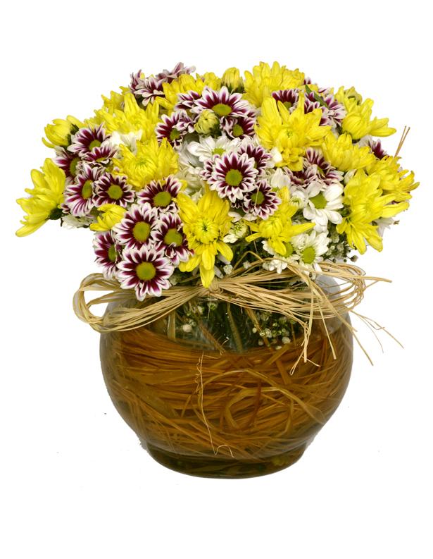 Cam Akvaryumda Renkli Mevsim Çiçekleri