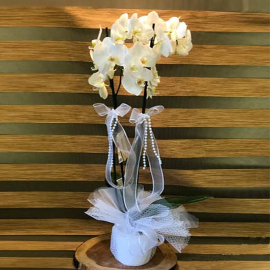 Seramik Saksıda Çift Dallı Beyaz Orkide