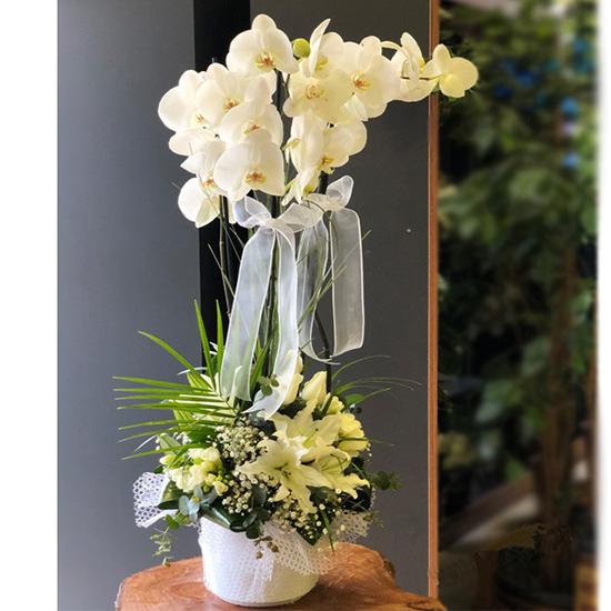 Seramik Saksıda Lilyum Aranjmanlı Orkide