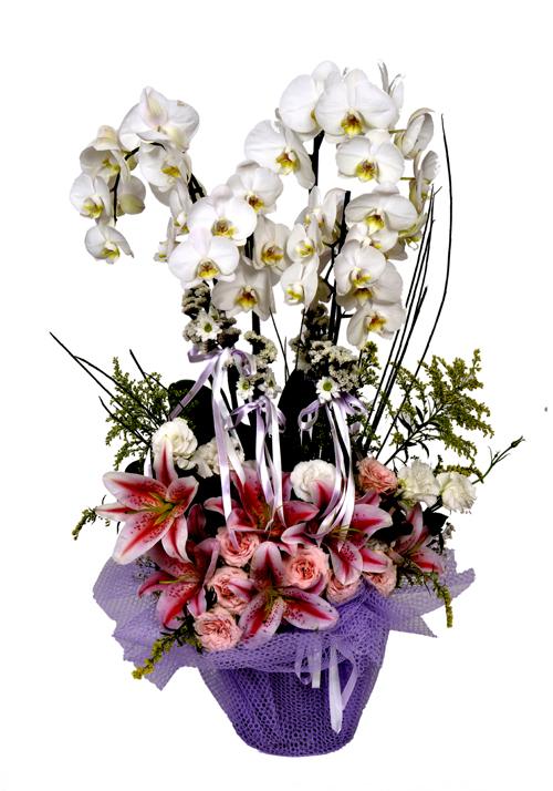 4 Köklü Orkide,Lilyumlu Aranjman Tanzim
